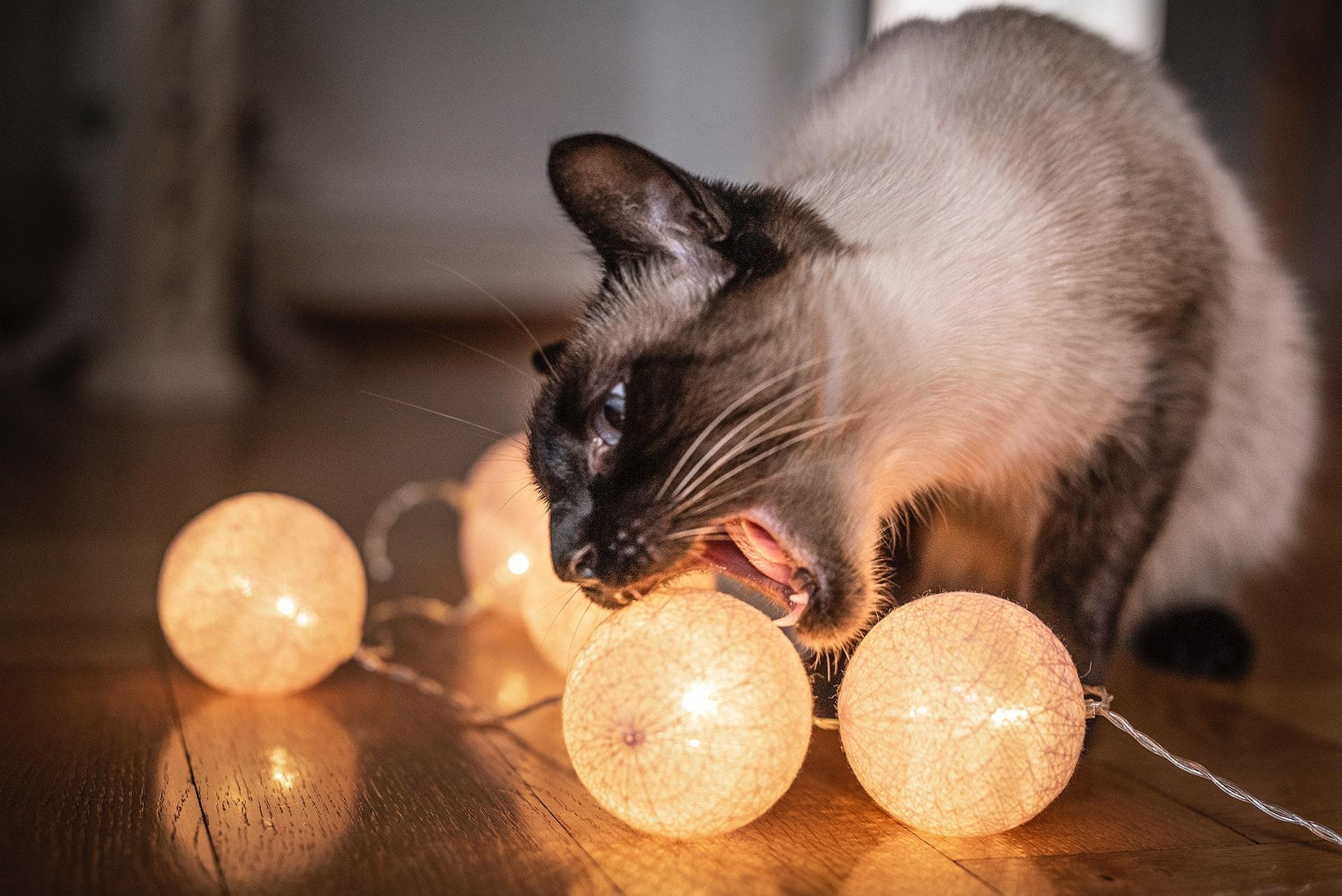 Blog Lifestyle - Votre chat est bien arrivé dans son nouveau foyer - Suivre sa Joie - Saskia Parein