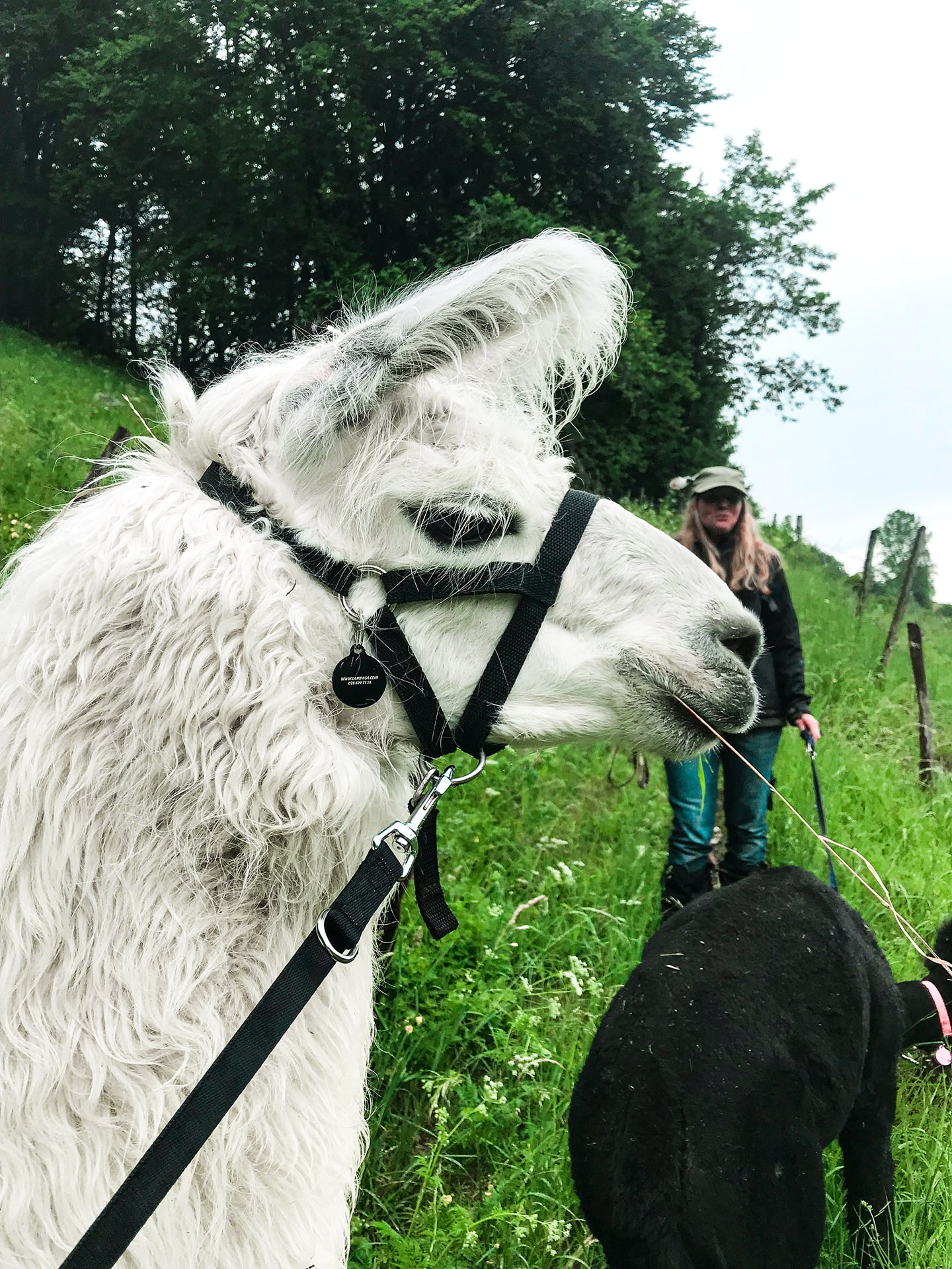 Blog Lifestyle - Direction les parc avec les lamas et les alpagas de Lampaga - Suivre sa Joie - Saskia Parein
