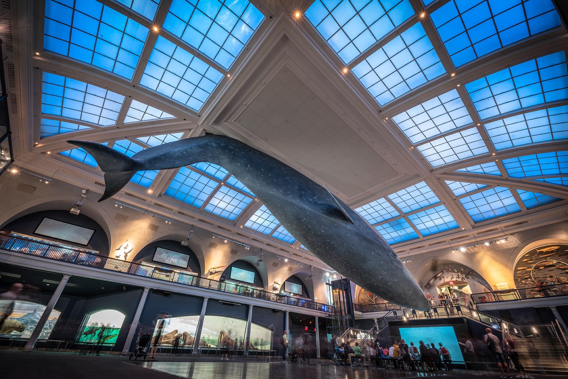 Blog Lifestyle - La fameuse baleine, taille réelle du Musée d'Histoire Naturelle- Suivre sa Joie - Saskia Parein