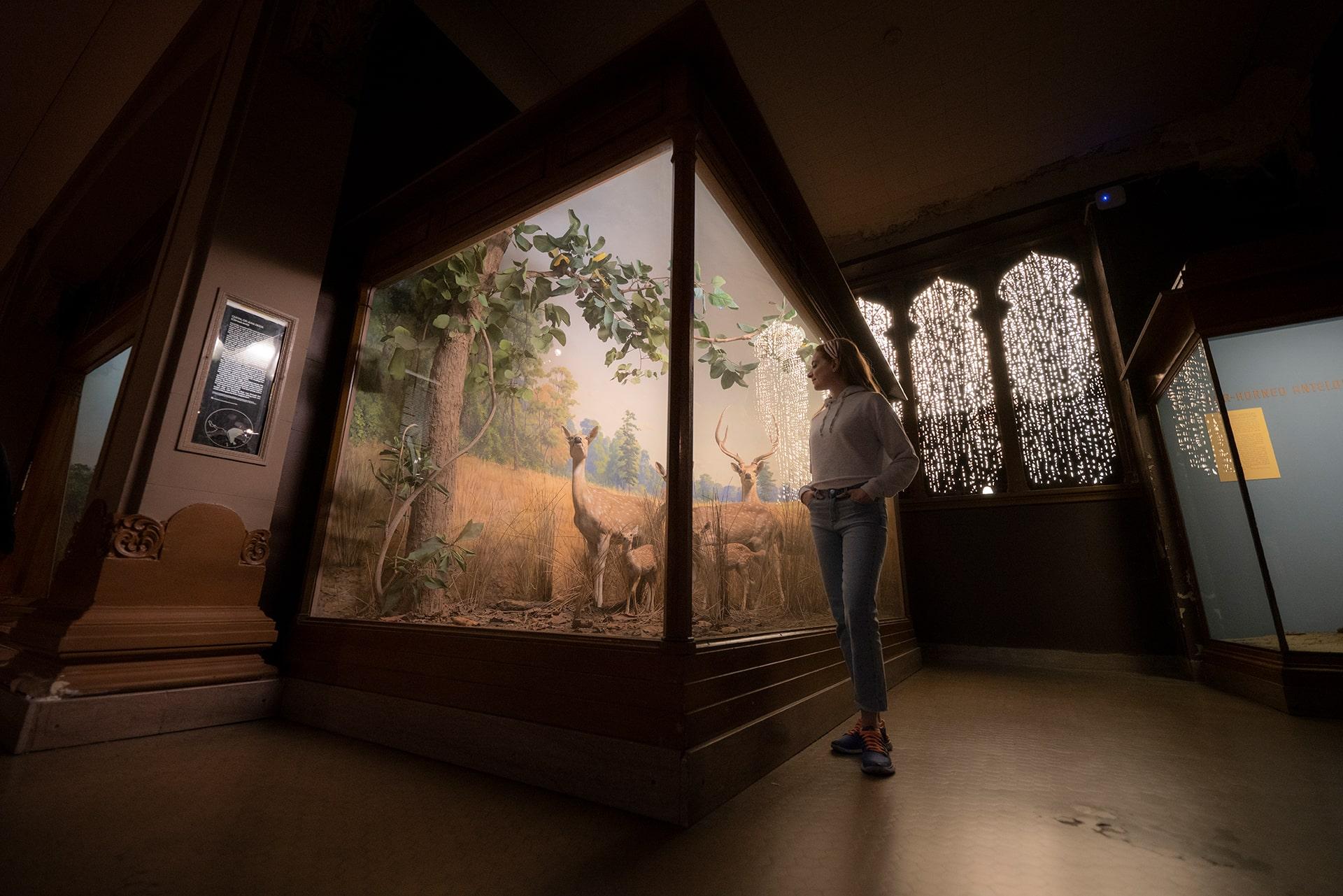 Blog Lifestyle - Musée d'Histoire Naturelle de New York, mon coup de coeur - Suivre sa Joie - Saskia Parein