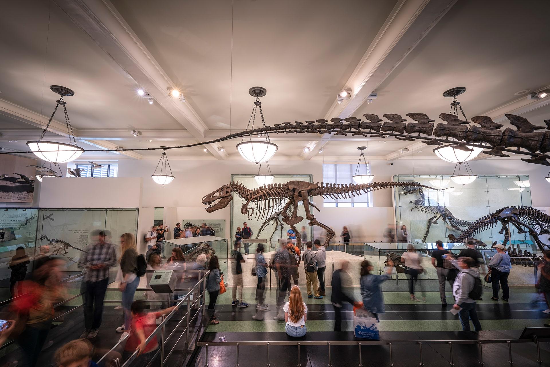 Blog Lifestyle - Le temps passe viiiite au Musée d'Histoire Naturel - Suivre sa Joie - Saskia Parein