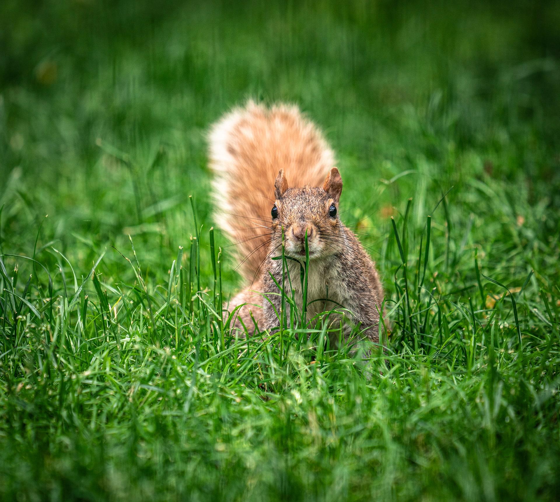 Blog Lifestyle - Un écureuil en quête de nourriture à Central Park - Suivre sa Joie - Saskia Parein