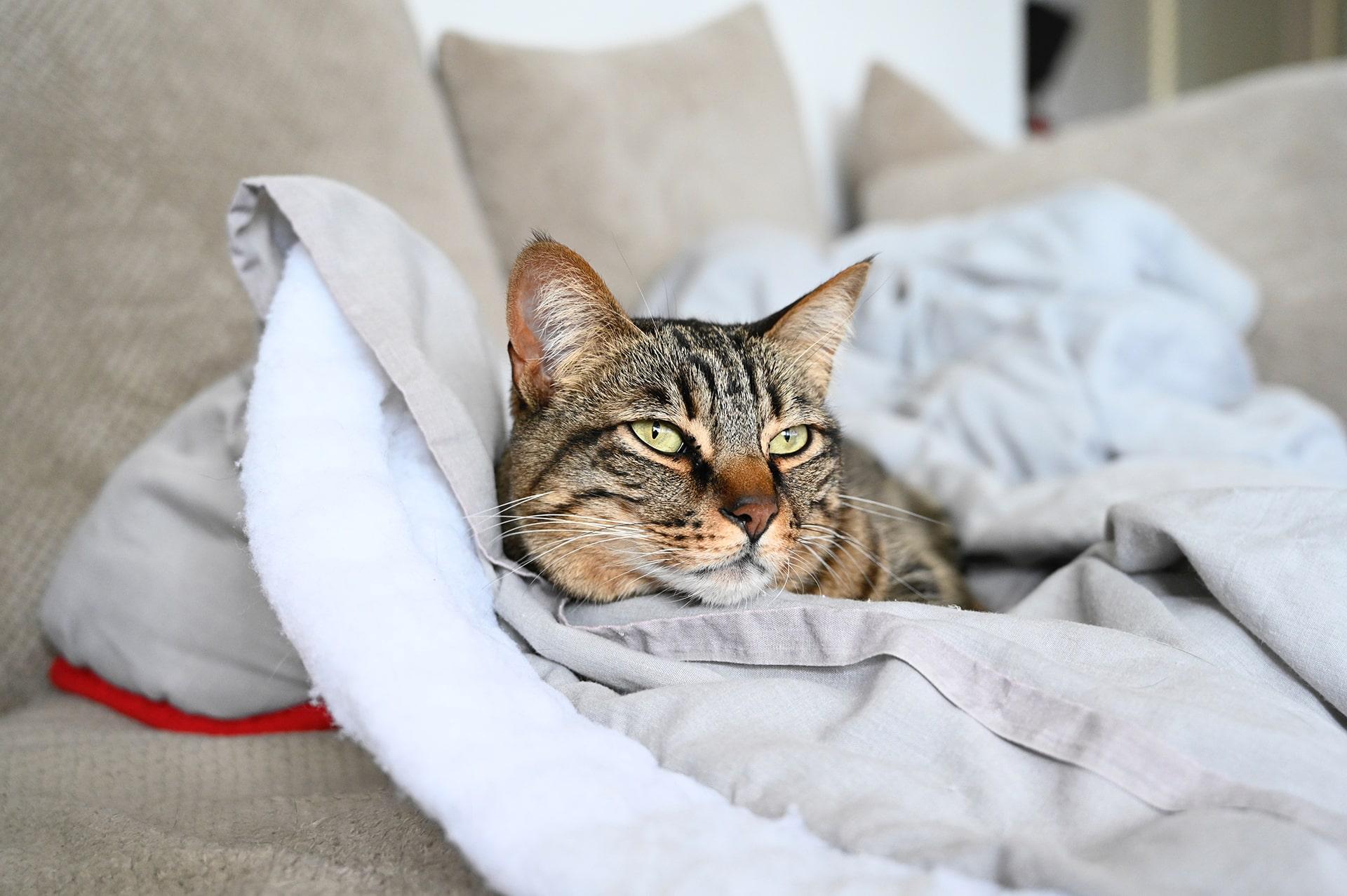 Blog Lifestyle - Une lessive multi-usage, y compris pour animaux - Suivre sa Joie - Saskia Parein