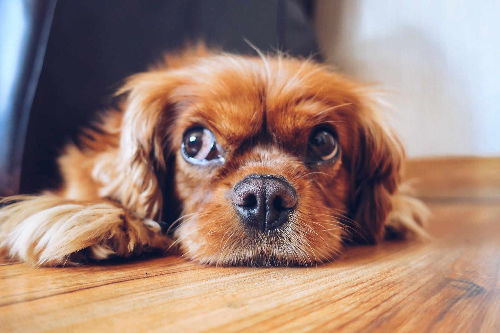 Blog Lifestyle - La communication animale intuitive - Suivre sa Joie - Saskia Parein