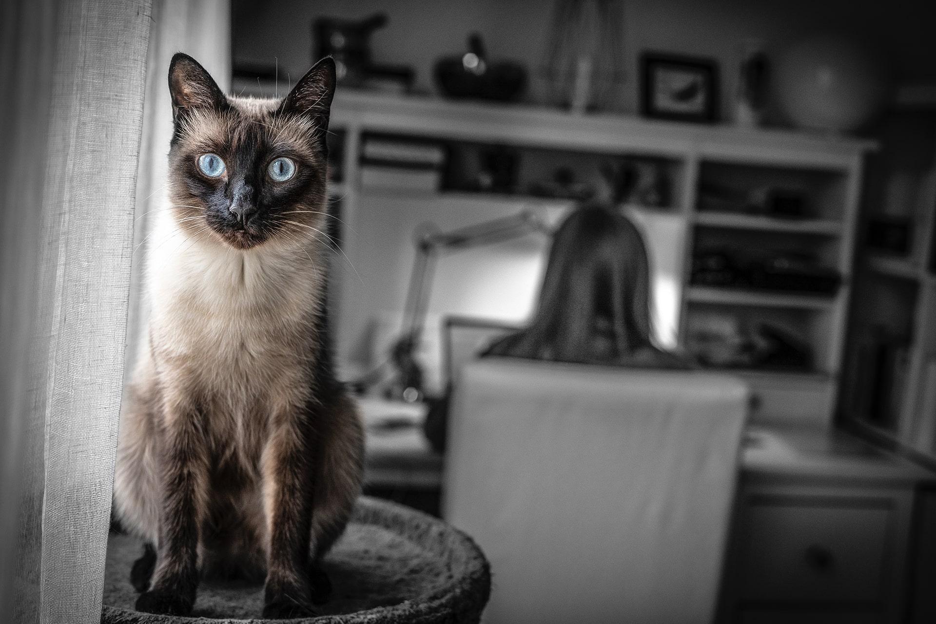 Blog Lifestyle - Quelques conseils lors de l'adoption d'un chat - Suivre sa Joie - Saskia Parein