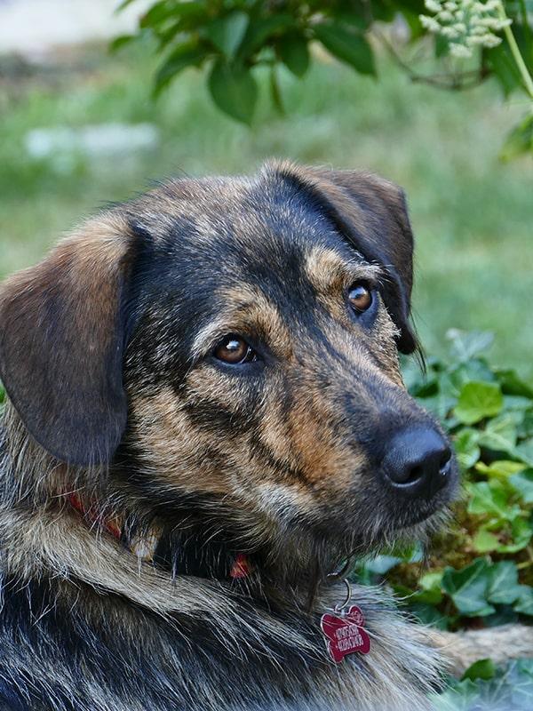 Suites des Communications Animales - Attaques systématiques durant les balades - Suivre sa Joie - Saskia Parein