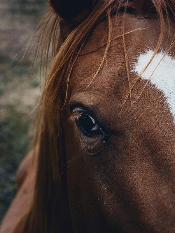 Suites des Communications Animales - La vibration du prénom - Suivre sa Joie - Saskia Parein