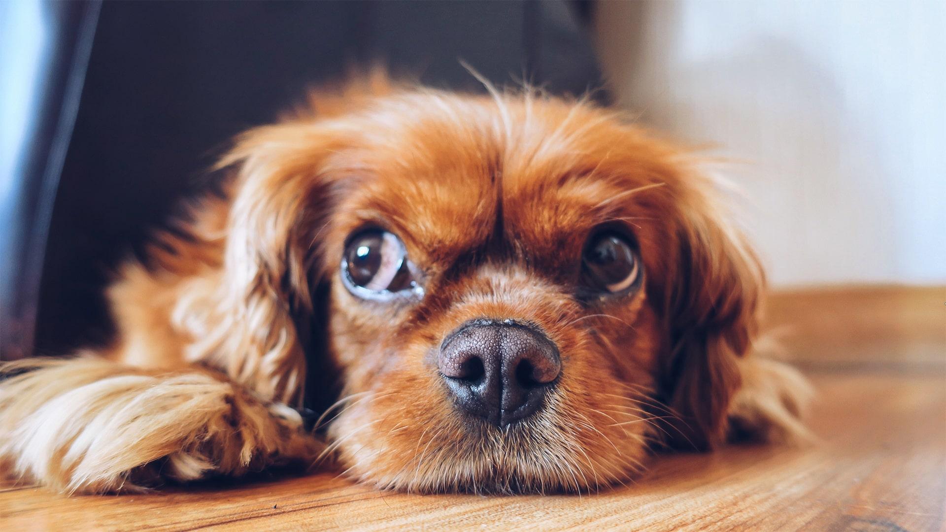 Blog Lifestyle - Qu'est-ce que la communication animale intuitive - Suivre sa Joie - Saskia Parein