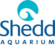 The Shedd Aquarium
