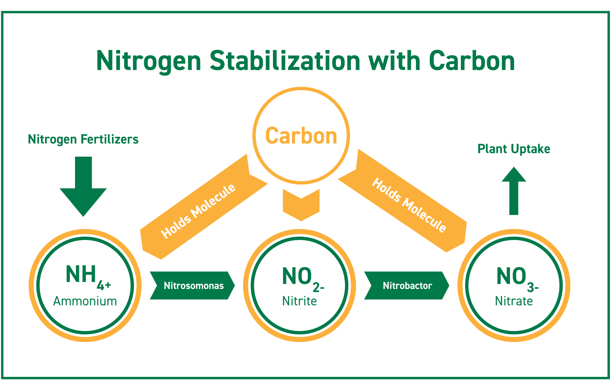Carbon can help stabilize all three forms of nitrogen: ammonium, nitrite, and nitrate