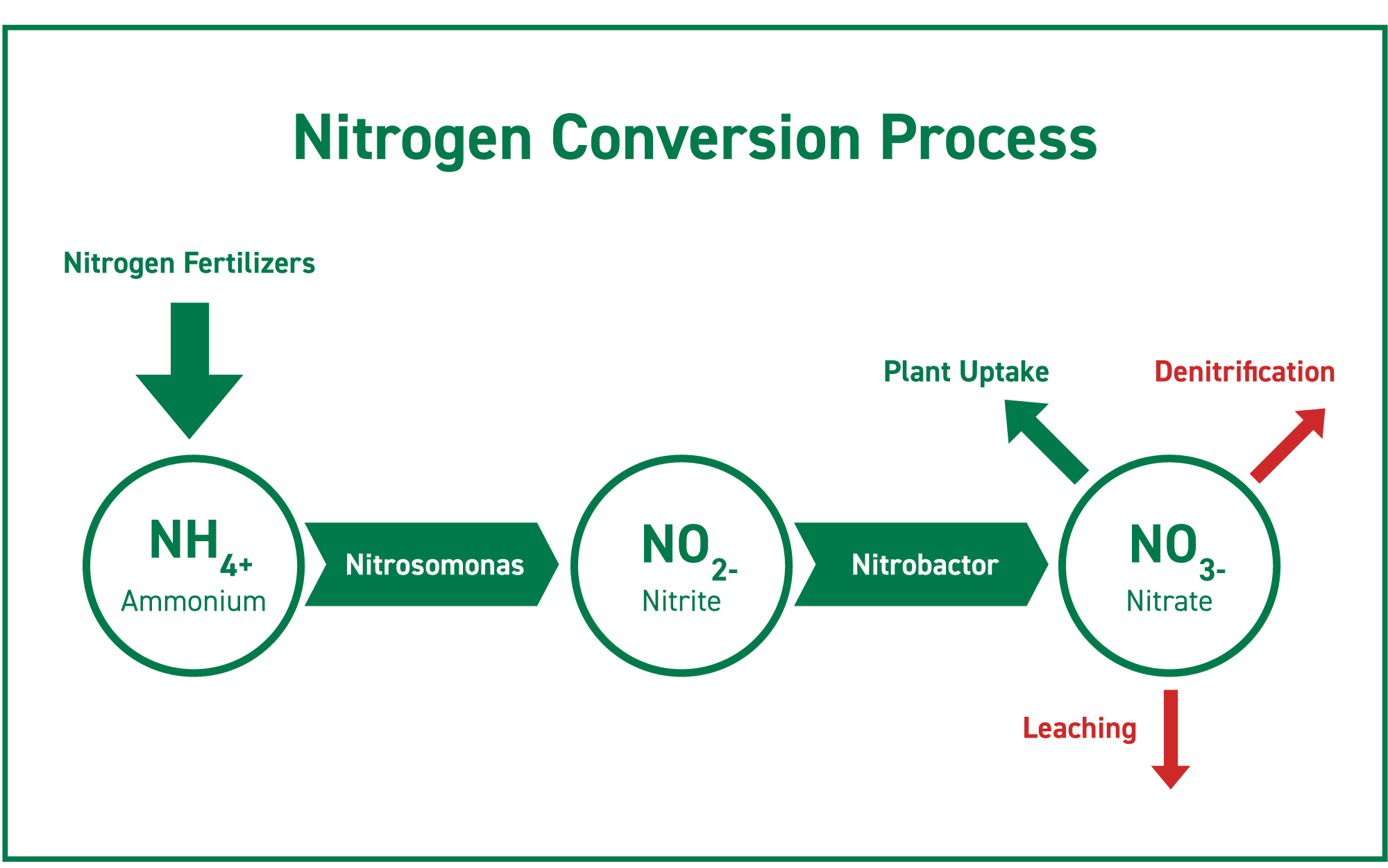 the nitrogen conversion process