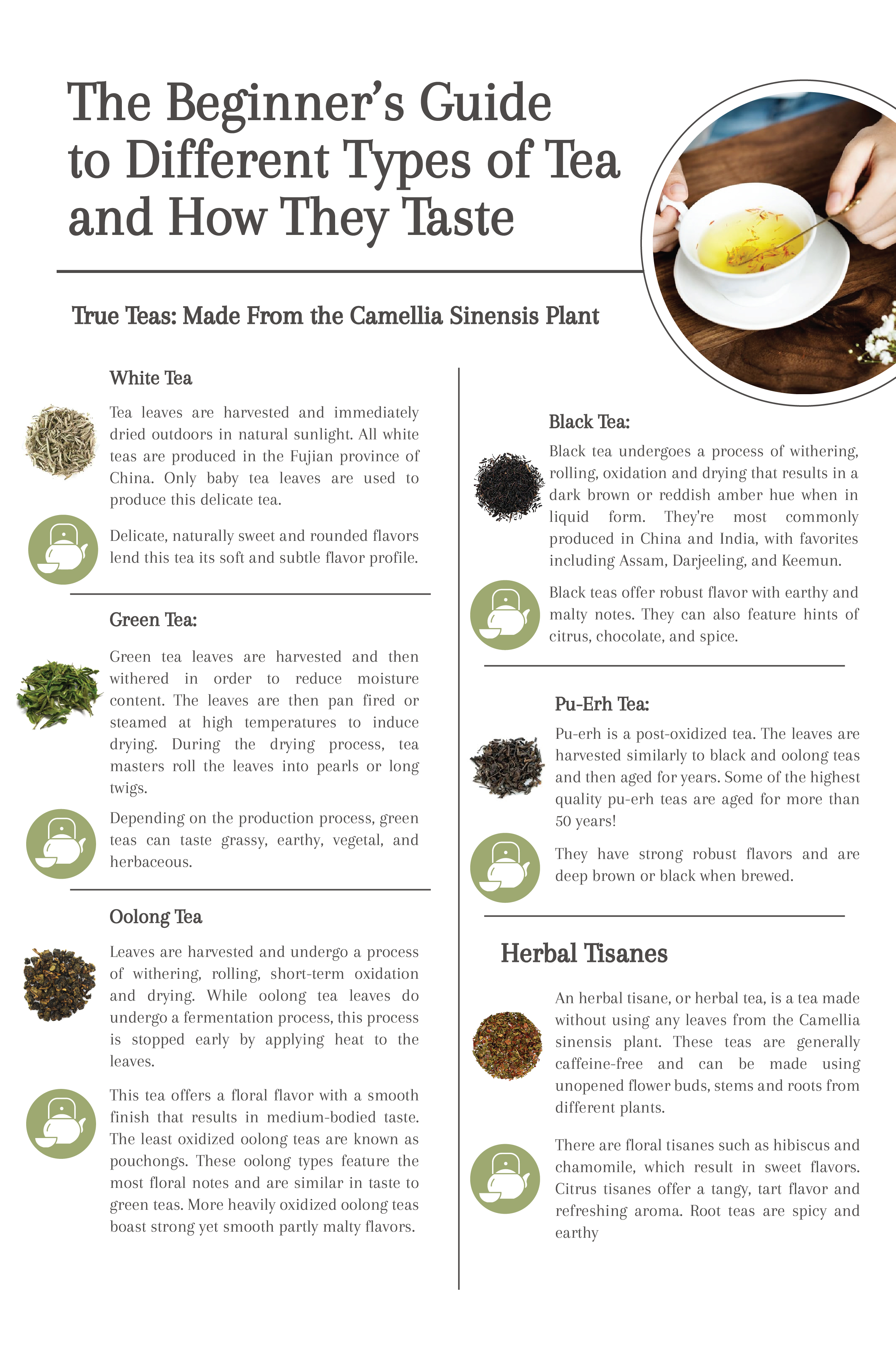 The Beginner's Guide to Different Types of Tea and How They