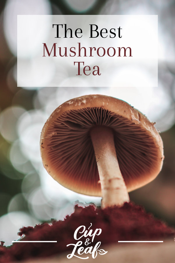 How to Make Mushroom Tea (It's Easier Than You Think) - Cup & Leaf