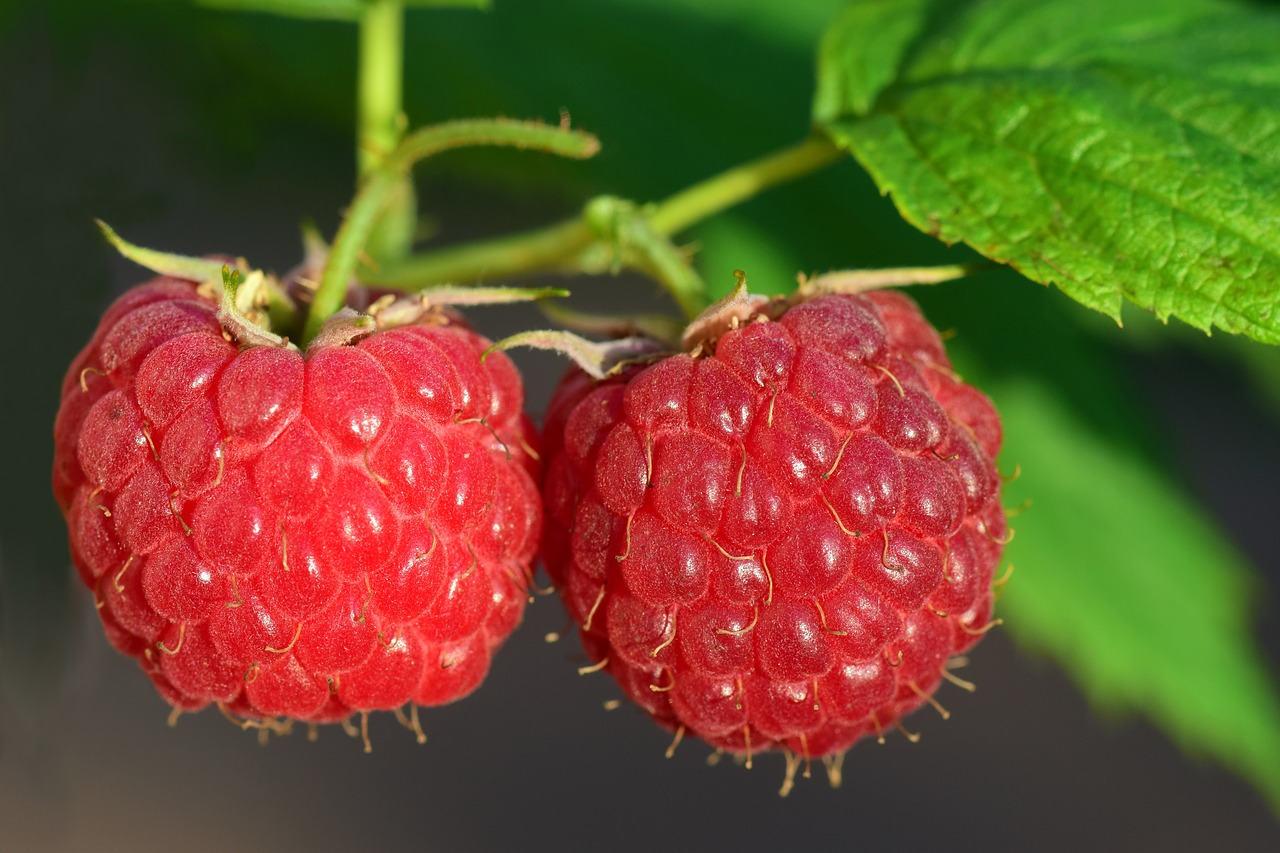 Raspberry Leaf Tea: Benefits, Side Effects, and Flavor