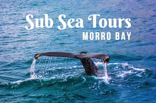 sub sea tours morro bay
