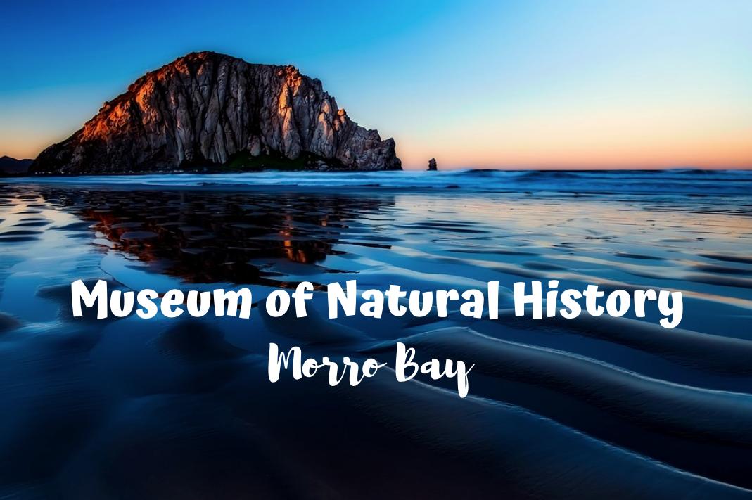 morro bay natural history museum