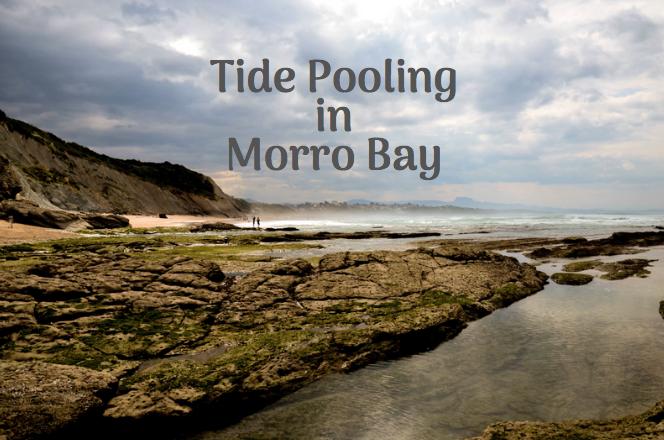 morro bay tide pools
