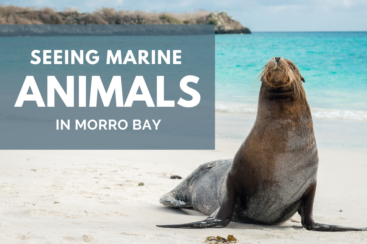 A Sea Lion on the Shore - Seeing Marine Animals in Morro Bay