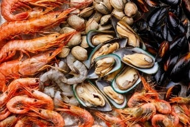 Variety of Shrimps and oysters