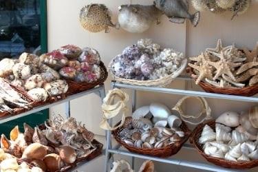 Sea shells shop