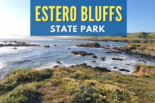 View at Estero Bluffs State Park - Estero Bluffs State Park