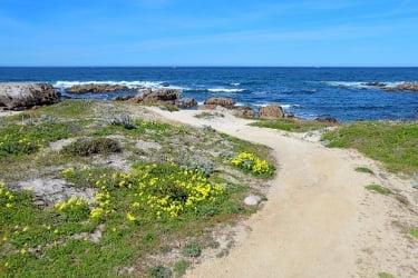 Walking trail at Estero Bluff