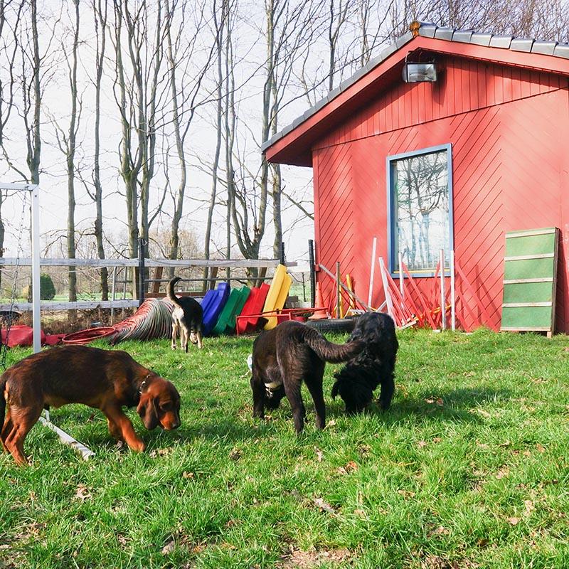 Arche4Dogs e.V. | Unser Hundehof