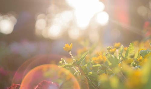 sunlight lights a patch of yellow flowers the way faith lights and guides michaela bates in her infertility struggle