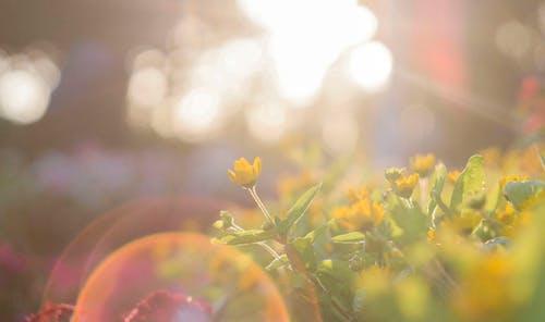Pretty flowers in the sunlight.