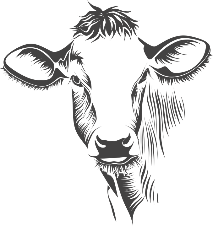 Orange Cattle - Houston Web Design and Developer for brands.