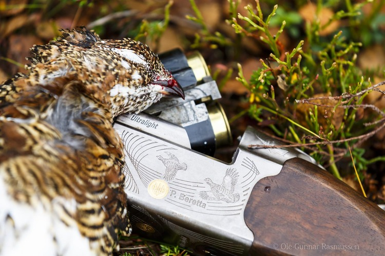 Grouse, Hare And Goose Hunting at the west coast of Finnmark, Sørøya