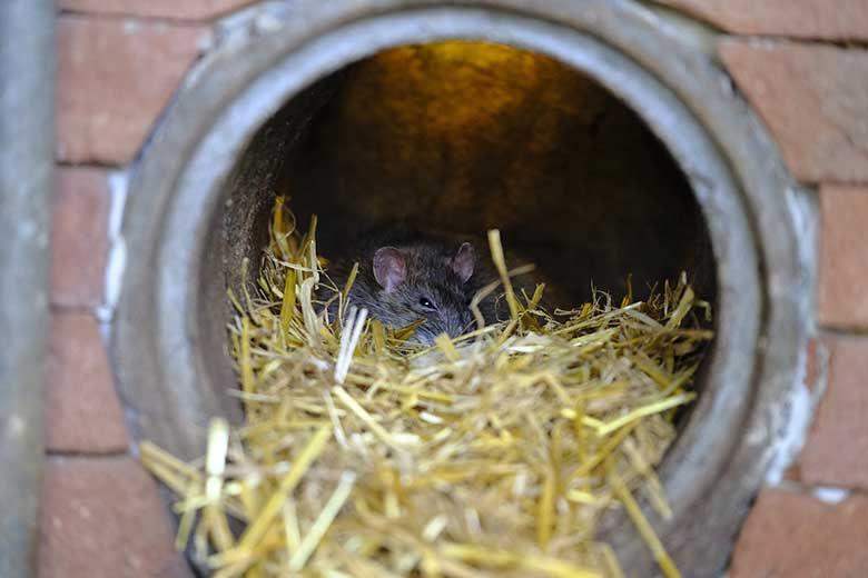 Brisbane's best pest inspectors find pest evidence
