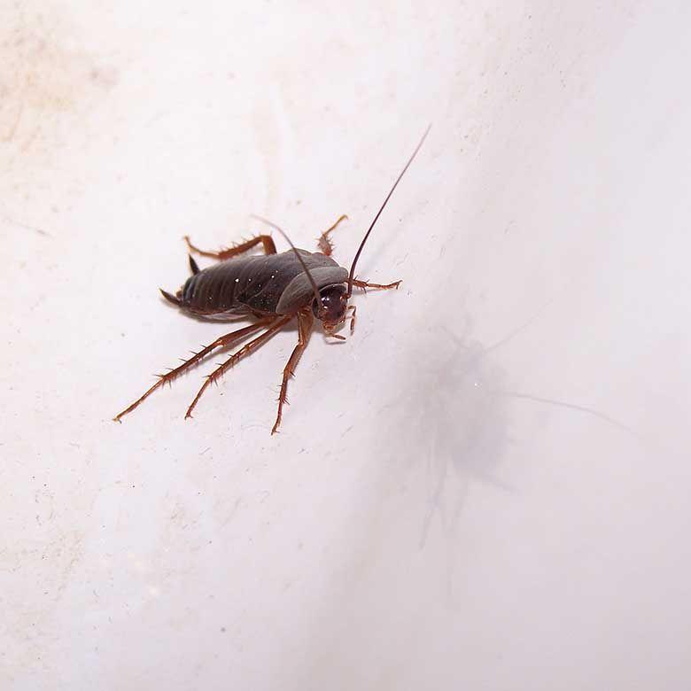 Avoid pest-borne disease with pest control