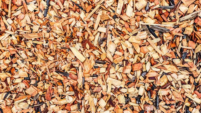 Wood used as mulch attracts flying termites