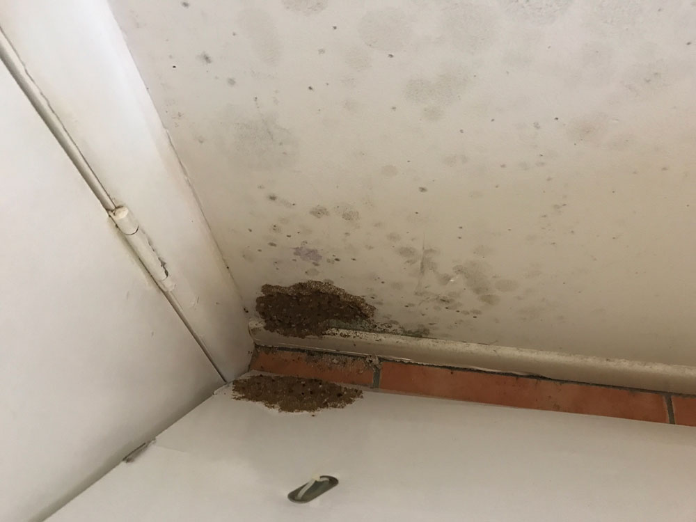 Limited area termite treatment costs are less