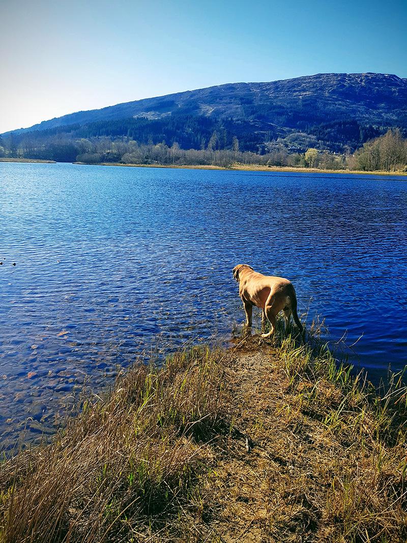 The lake at Solneset Farm / Solneset gård