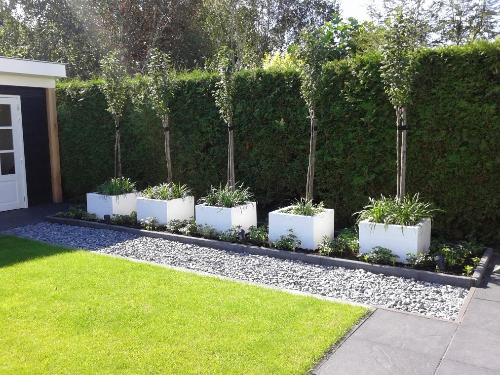 De rij van 5 losse witte bakken met boompjes tussen de bodembedekkers staat heel goed in deze strakke tuin.