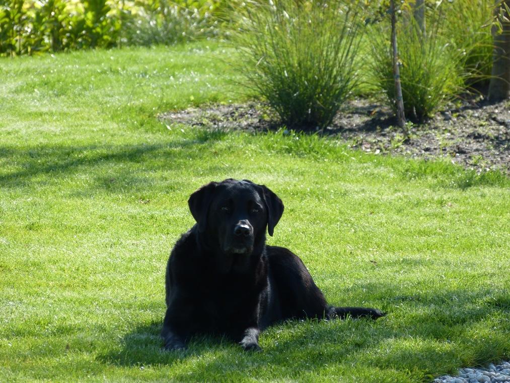 De tuin werd rondom afgesloten voor de honden.