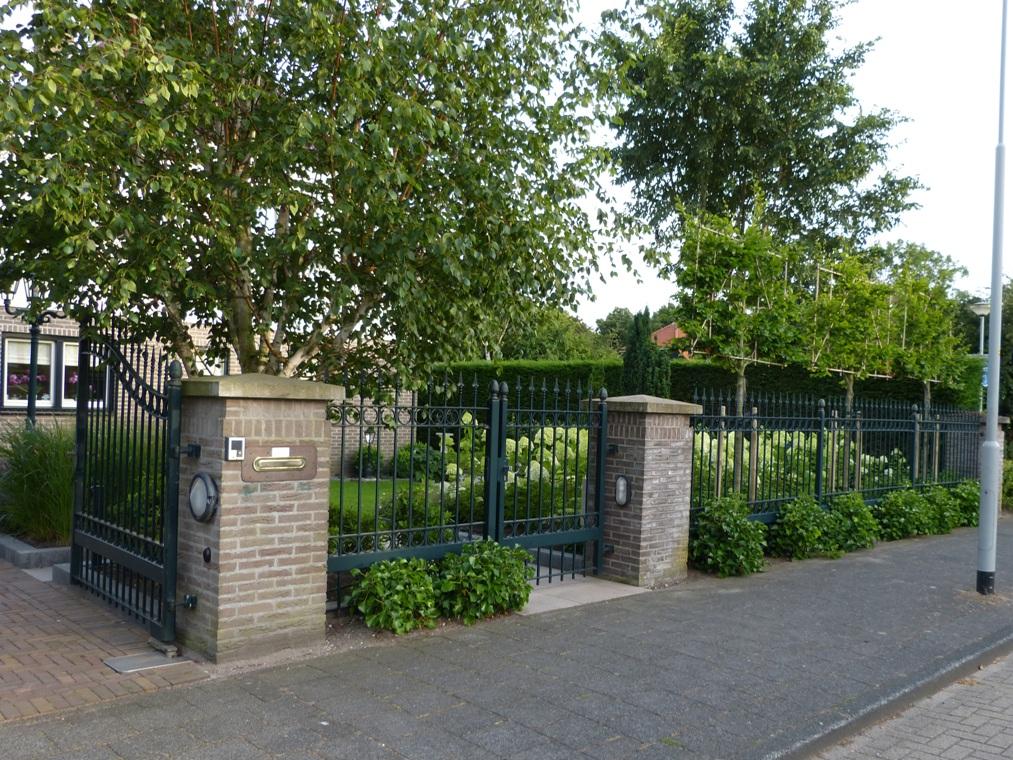 Leibomen en struikhedera achter het mooie hek van deze voortuin.