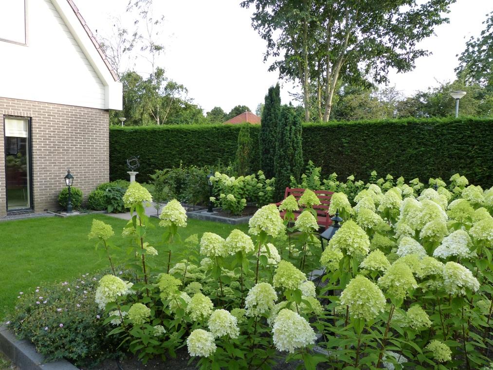 De pluim hortensia's horen gewoon thuis in deze tuin.