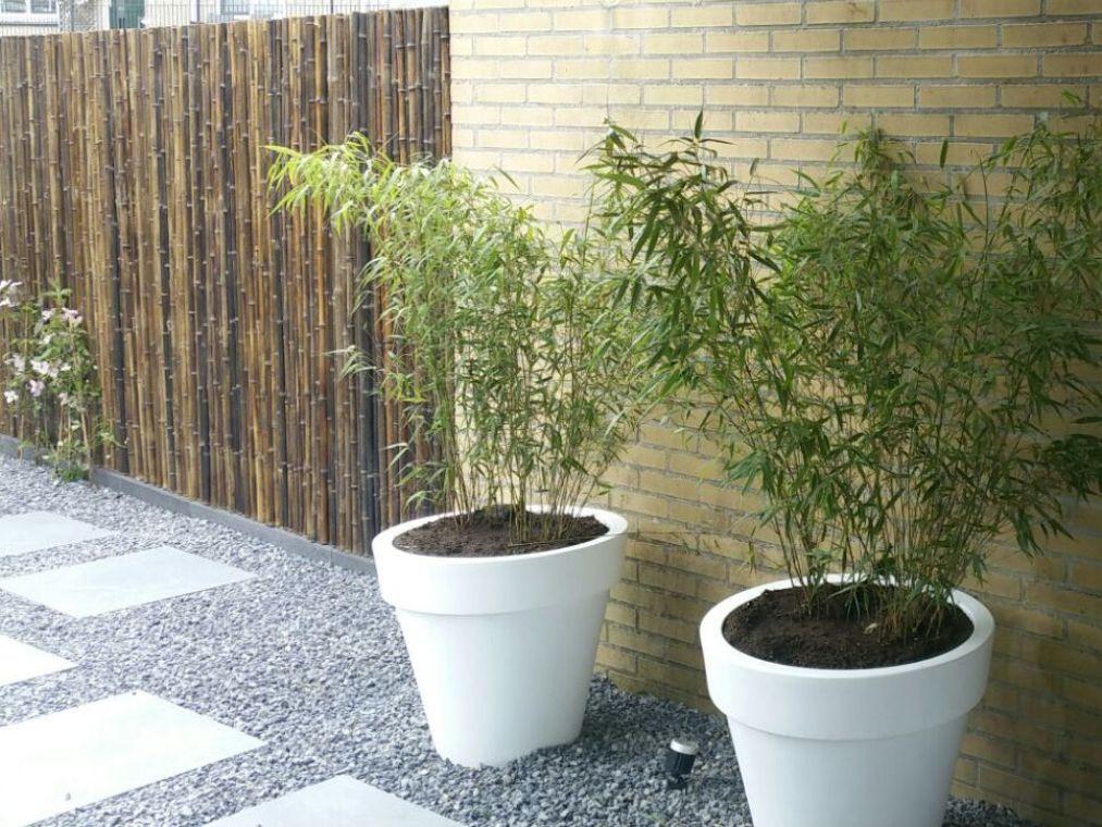 Witte bakken met bamboe in antraciet split met stapstenen naast een schutting van bamboe op rol.