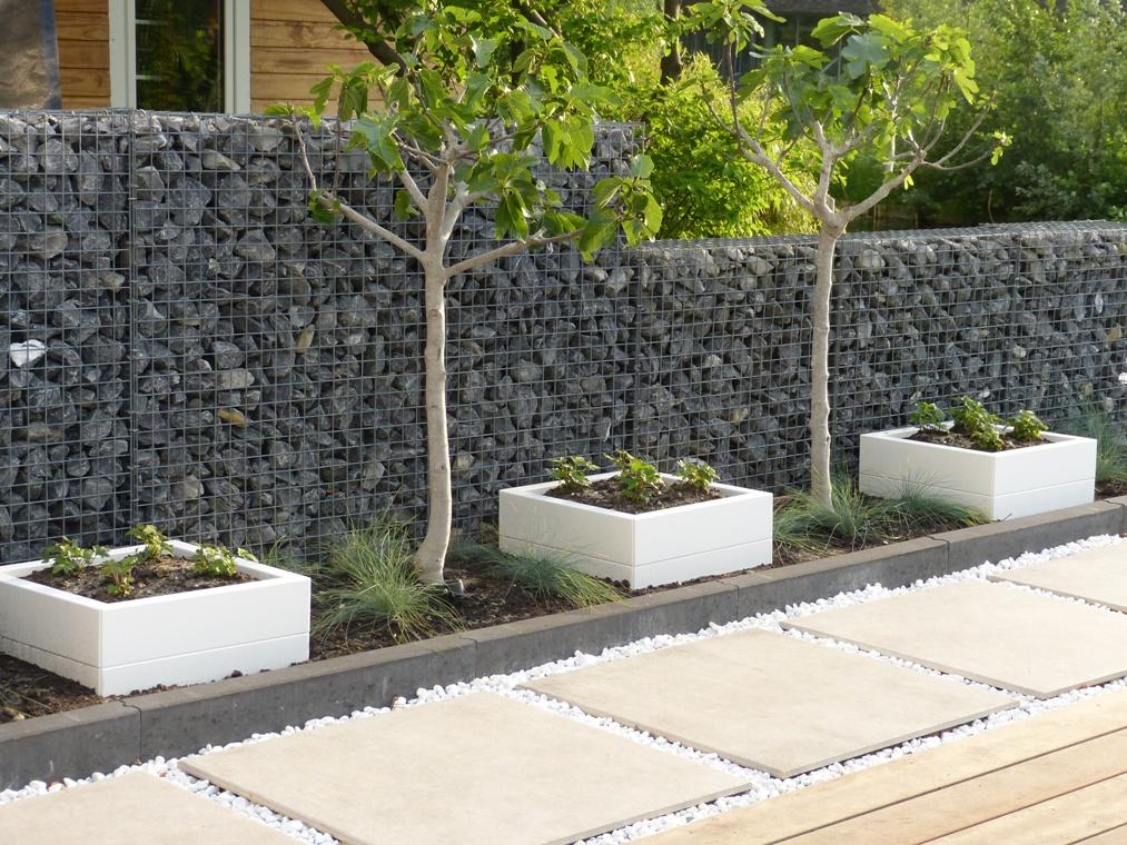 Drie witte plantenbakken op rij in een verhoogde border met twee vijgen ertussen.