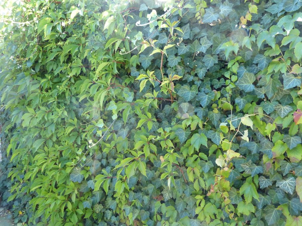 Klimplanten door elkaar