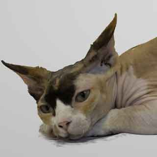 Sphynx-cat-Queen-Fortuna-of-Annie's