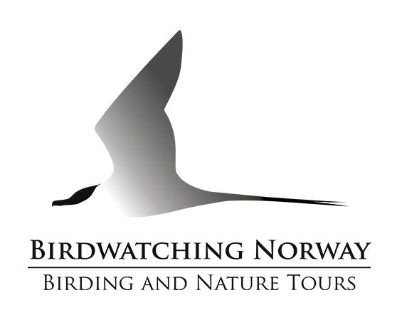 Birdwatching Norway