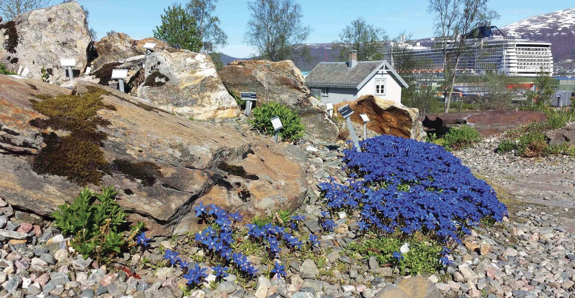 Tromsø Arctic – Alpine Botanical Garden