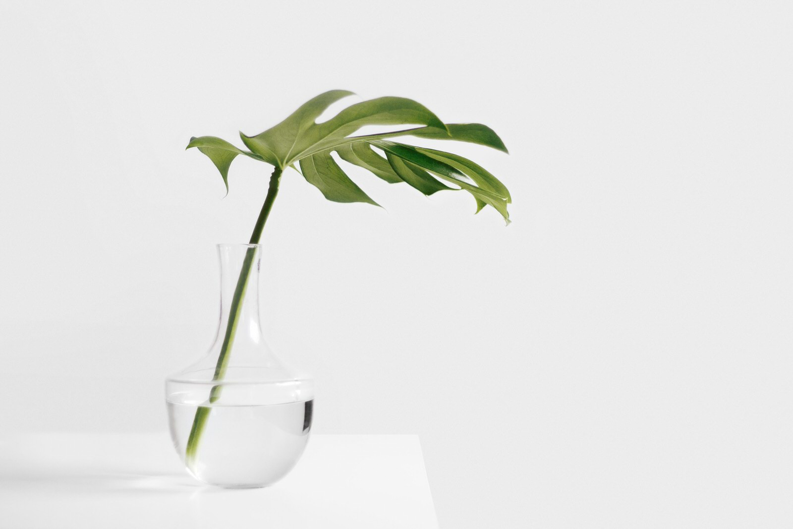Plant clipping in water