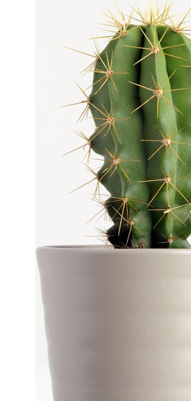 Cutout of a cactus