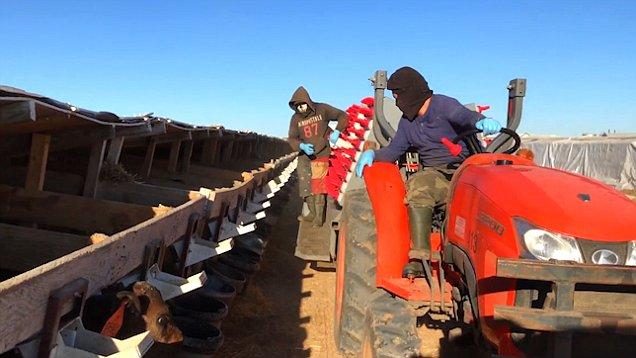 "Granja acusado de ""esclavitud económica"""