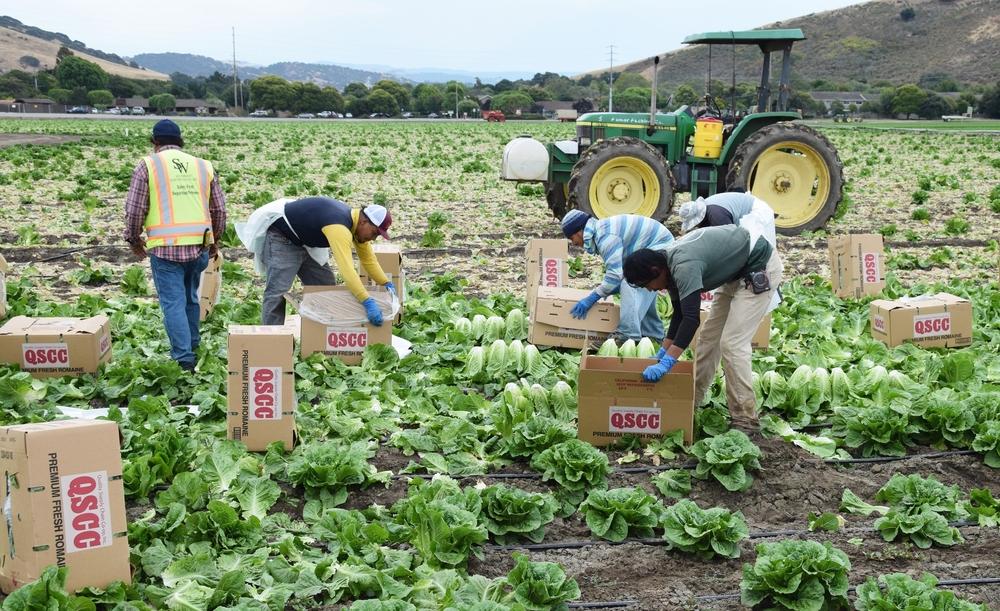 Derechos de Empleo para Trabajadores Indocumentados